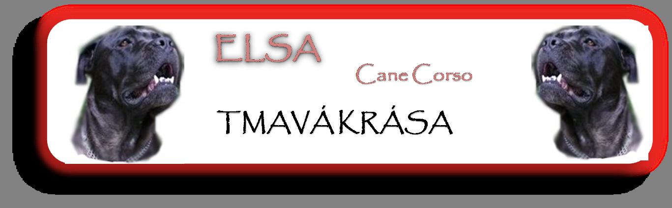 http://canecorso-tmava-krasa.wbs.cz/